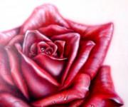 rosa.JPG 70 x 70