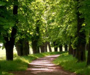 Natura - http://it.fotolia.com/id/27947356