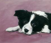 Puppy in lavander - one night sketch