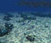 underwater_world_85bis2