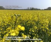 2010-04 paluarte fiori gialli moimacco 8582