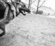 Kira Dog