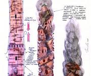 Bozza per lo studio del crollo della Torre Asinelli Bologna ottobre 2009