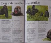 I gorilla / Fleurus