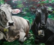 Due mucche per un divano