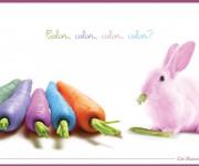 Color Color