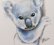 Baby koala drawing