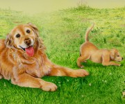 Retriever / Ravensburger