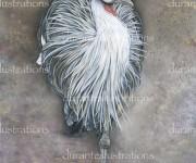 gru coronata very low