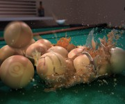 eggpool