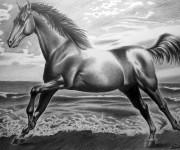 Cavallo su spiaggia