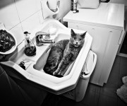 Gatto nel Bagno