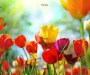 http://it.fotolia.com/id/12856836