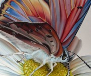 Farfalla e margherita