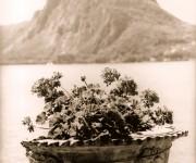 Vaso di gerani sul lago di Como