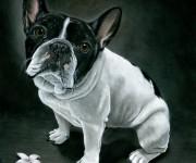 french bulldog low