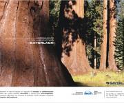 sayerlack alberi