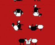 pecorelle k