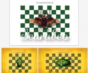 scarabeo-estesa