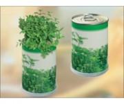lattina-flower-in-can
