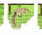 Squirrel - da una fotografia di Eugenio Schisano p.g.c.