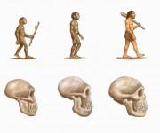 ELI evoluzione