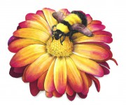 ape su fiore grande