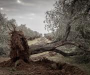 Daniele Panareo Fotografo matrimonio  Lecce - REPORTAGE-0801