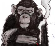 scimpanzè 1