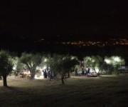 tra gli ulivi...di notte