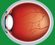 illustrazione sezione occhio