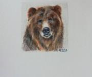 A brown bear small portrait