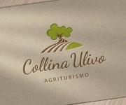 collina_ulivo