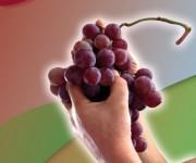 proposta concorso città-del-vino-2007