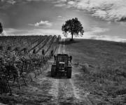 Fattoria il Gambero - Oltrepo Pavese