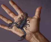 scorpion on the hand