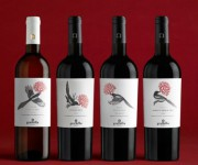 etichette gazze vino graffetta