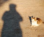 Autoritratto con gatto