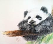 Hanging panda
