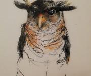 Malaysian Barresi Eagle-Owl