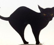 Black cat on wall