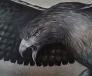 Falco in volo (particolare)