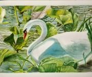 fantasy1- acquerello