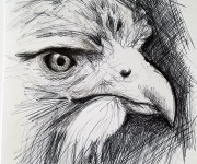 10minutes owl sketch