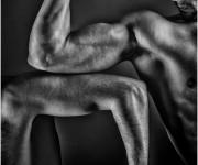 Muscoli e crvello