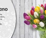 tulipano_80x40