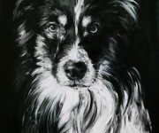 B&W Border Collie