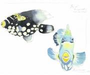 Pesci tropicali marini