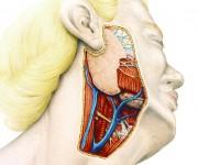 tav_anatomica1