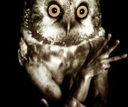 owl_,am_006